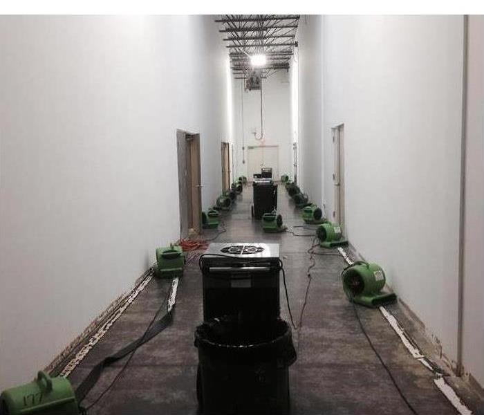Why SERVPRO Mold Grows Quickly in Wet Places