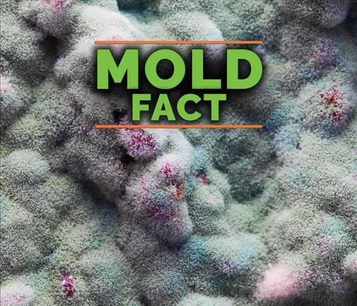 Aspergillus Niger is green and pink mold